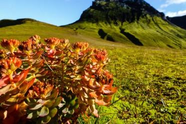 park krajobrazowy na islandii