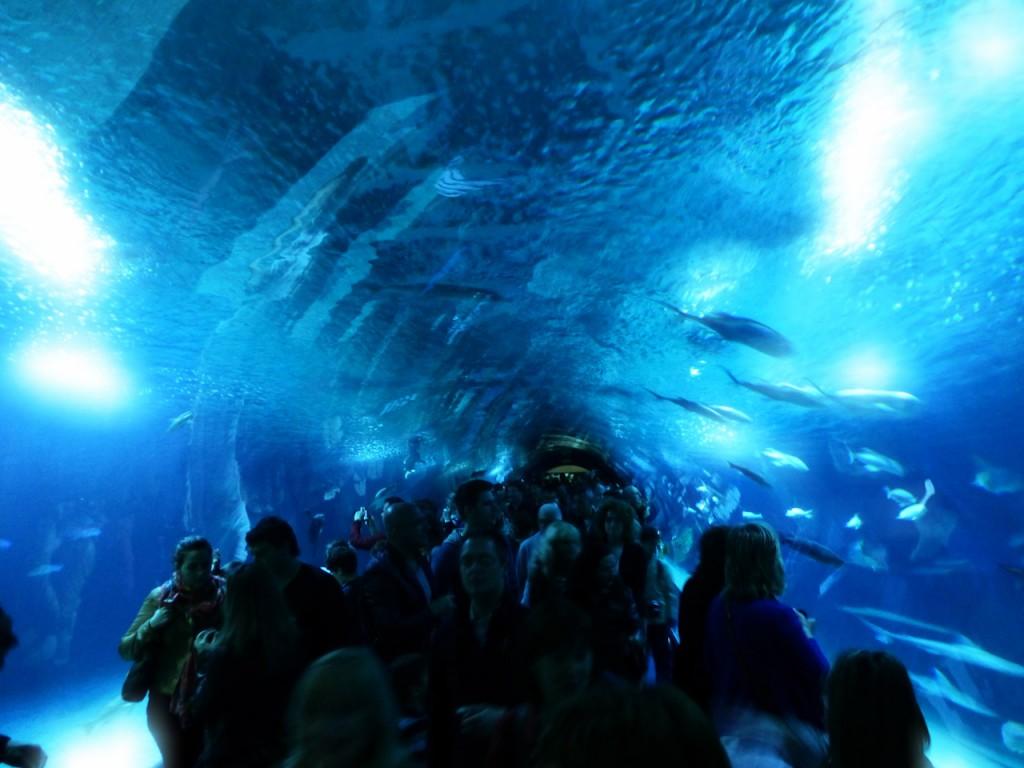 walencja oceanarium