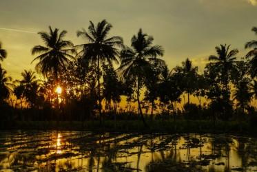Zachód słońca nad polami ryżowymi