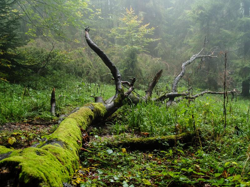 lasy w bieszczadach