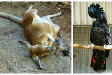 australia zwierzeta zwiedzanie