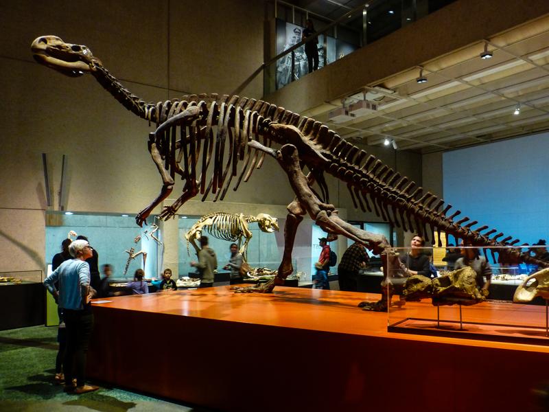 brisbane muzeum dinozaury