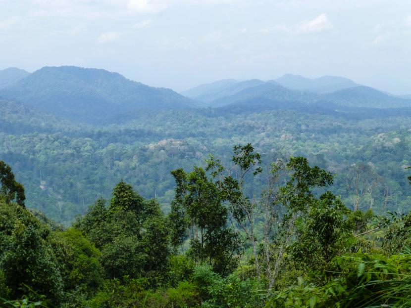 dżungla taman negara