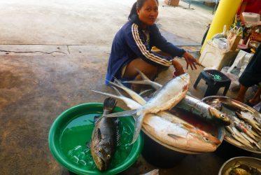 fish-market-thailand