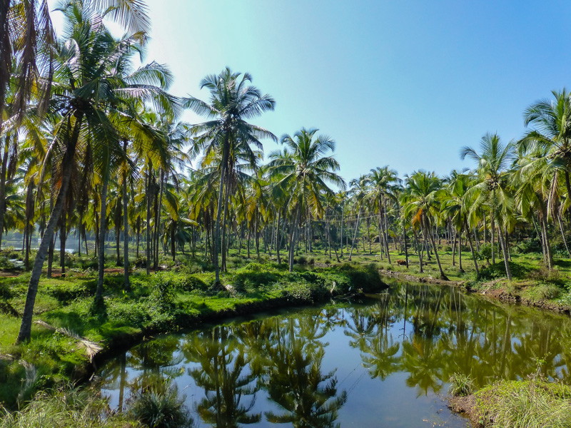 Keralska zieleń