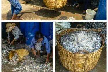 kiszone ryby w kambodzy