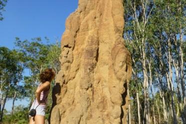 kopce termity