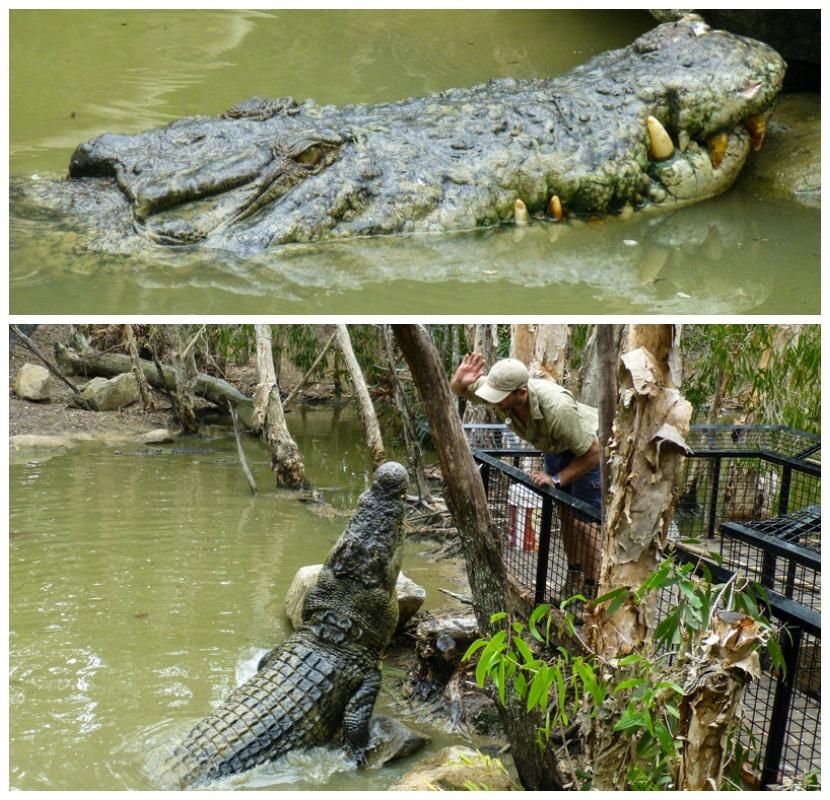 krokodyle gdzie zobaczyc australia