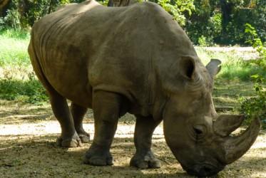 Co by jednak nie mówić, to zoo w Mysore było jedną z najciekawszych atrakcji podczas naszej całodniowej wycieczki. Do tego jedną z najtańszych - 2zł za osobę.