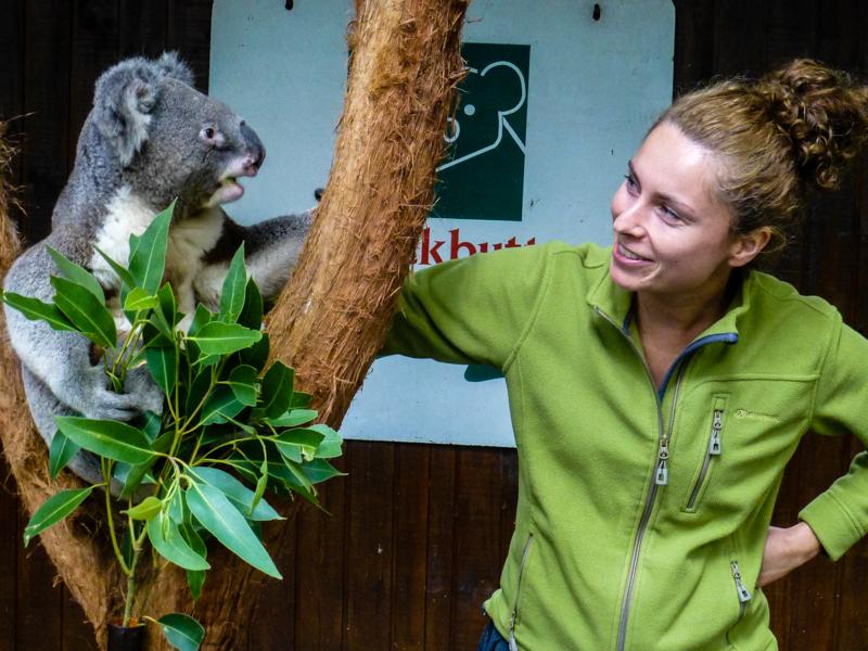 pogaduchy z koala