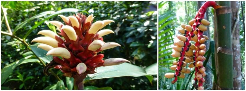 roślinność malezja