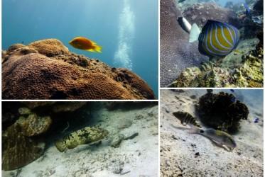ryby nurkowanie tajlandia