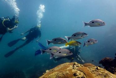 ryby w tajlandii