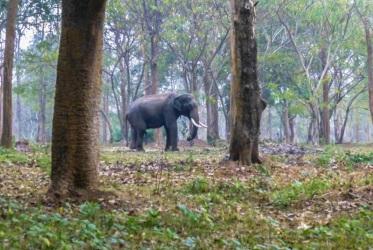slonie indie