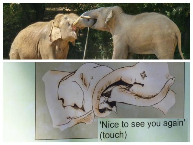 slonie w indiach