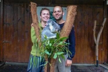 sweet foacia z koala