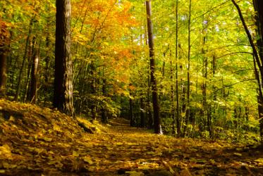 trojmiejsi park krajobrazowy