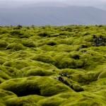 A po drodze, jak widać, zieleń przeplata się z  czernią.  Ten przedziwny krajobraz, to porośnięte czymś podobnym do mchu pokruszone skały wulkaniczne. Ciągną się kilometrami.